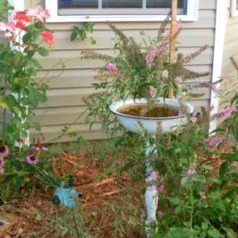Mid Summer Cottage Garden