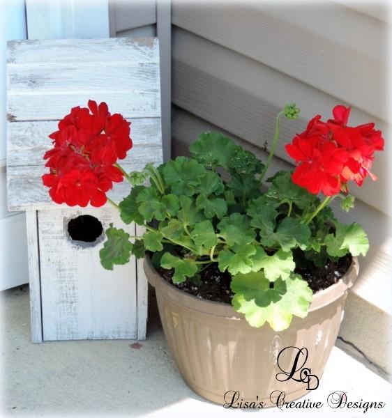 spring geraniums