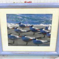 Framed Seagull Photograph Beachy Wall Decor
