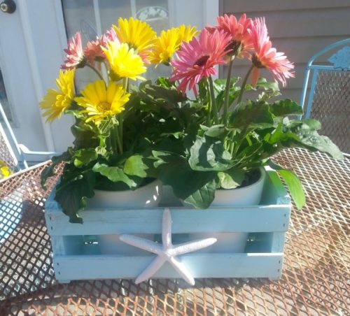 Upcycled Starfish Wine Crate Planter Box