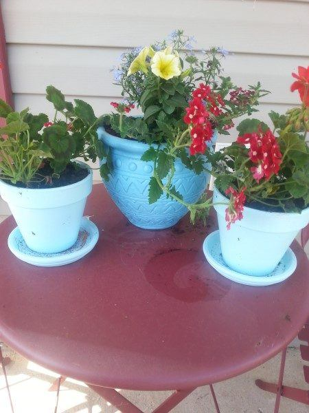 Painted Potted Flowers