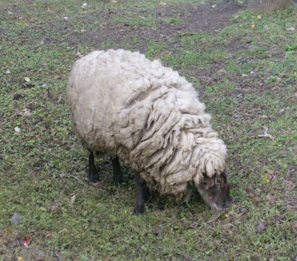 Mike's Farm Petting Zoo
