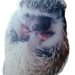 Hedgehog Personalized Pet Photo Pillow