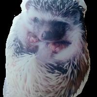 Hedgehog Personalized Pet Photo Pillow