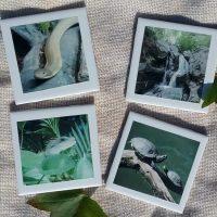 Handmade Nature Inspired Reptile Coaster Set