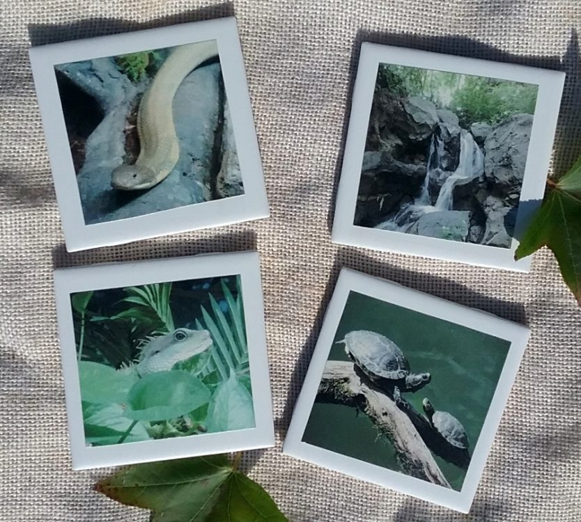 Nature Inspired Reptile Coaster Set