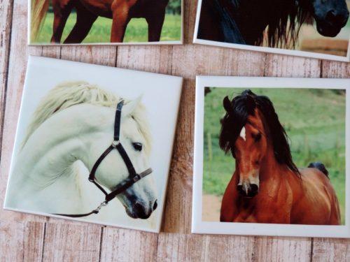 Horse Photography Coasters