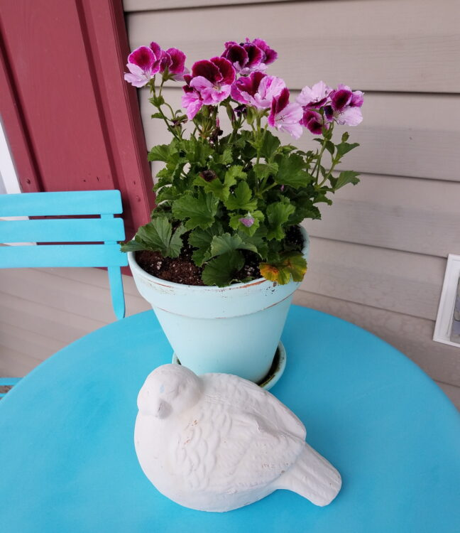Country Porch Refresh Potted Geraniums
